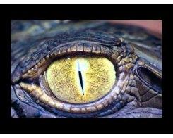 Reptilian (P.R.C.)